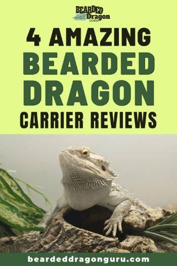 bearded dragon carrier