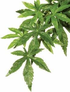 Exo Terra Silk Plant
