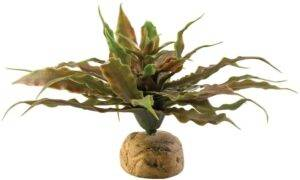 Exo Terra Star Cactus Plants
