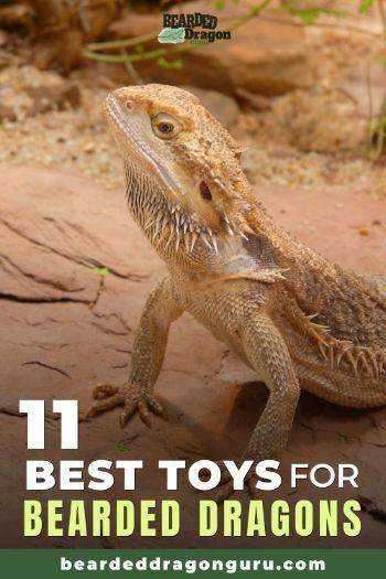 Best Bearded Dragon Toys