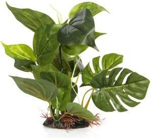tank decor plant