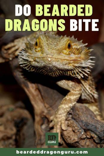 do bearded dragons bite