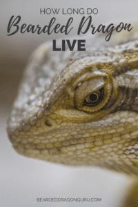 How long do bearded dragons live
