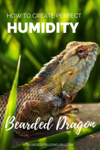 increase humidity for bearded dragon