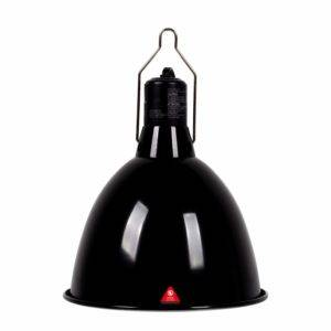 Bearded Dragon Lighting Setup Fixture Heat Lamp