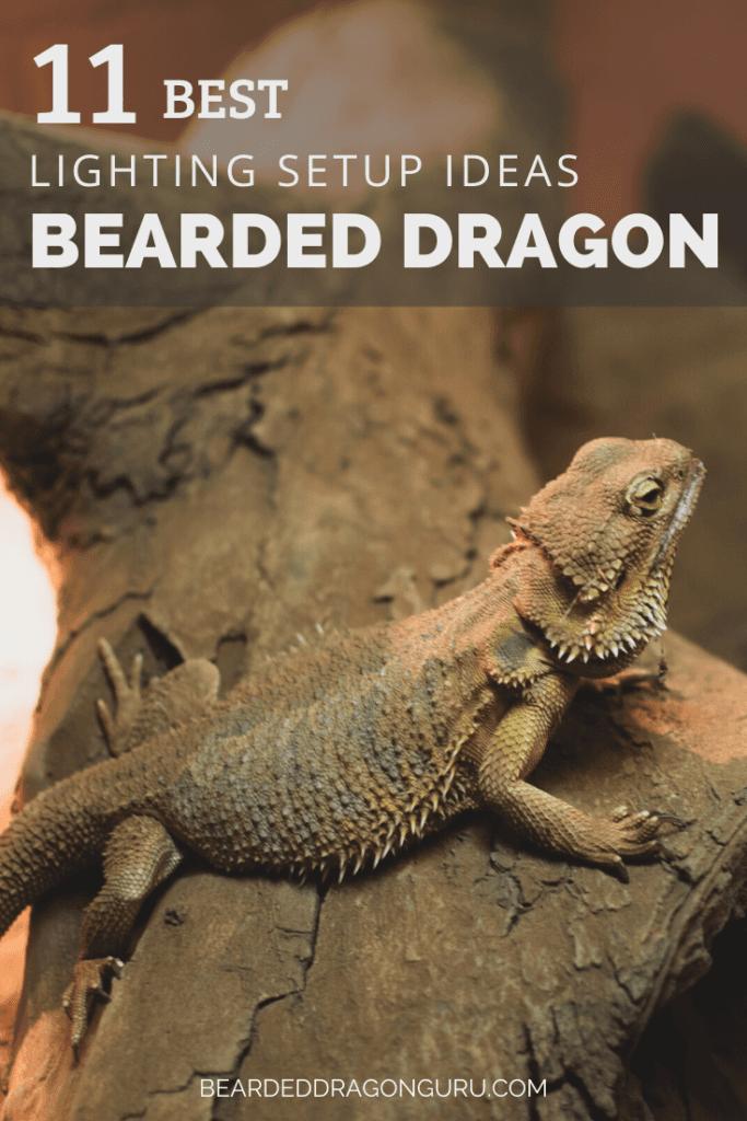 Bearded dragon lighting setup