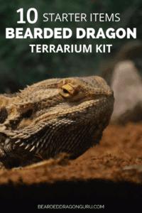 Bearded Dragon Terrarium kits