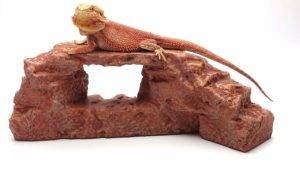 Bearded Dragon Basking Rock Red