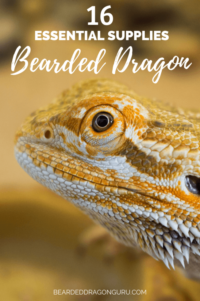 Supplies for bearded dragon