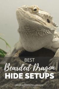 Hide for bearded dragon