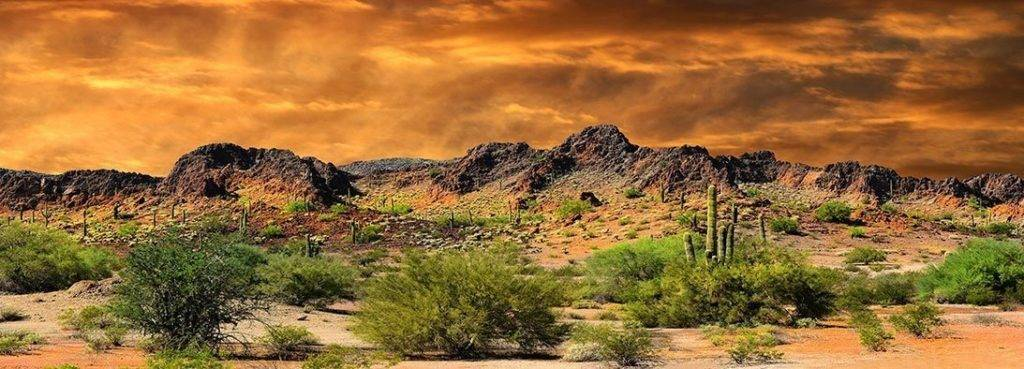 Bearded Dragon Tank Decor Terrarium Background Orange Desert