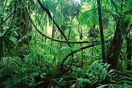 Bearded Dragon Tank Decor Terrarium Background Lush Green Jungle